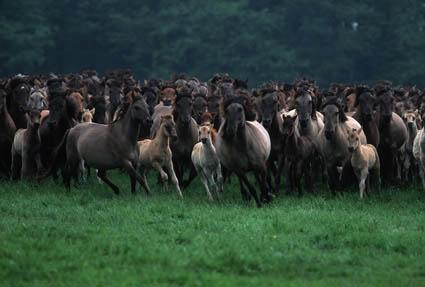 populáció