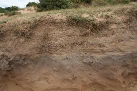 homokos talaj