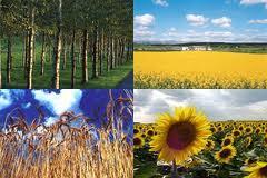 http://www.alternativenergia.hu/wp-content/uploads/2010/03/biomassza.jpg